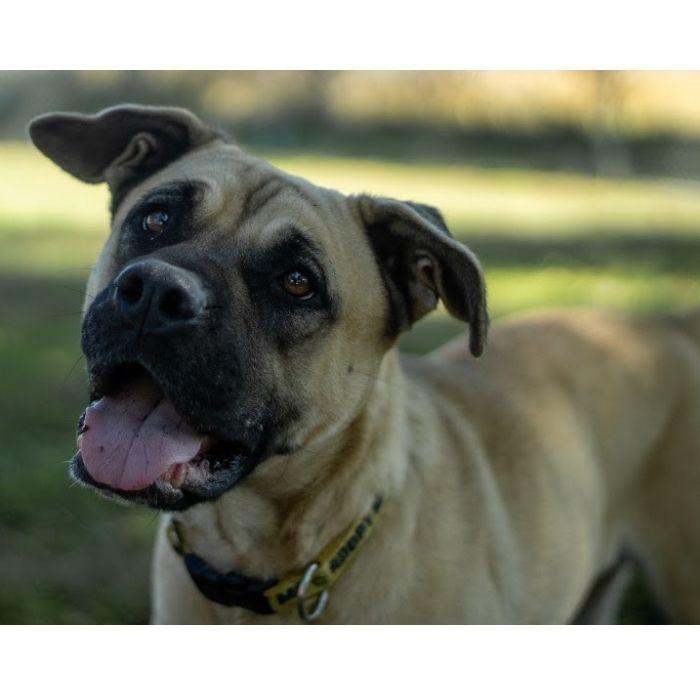 Selean, adopt, dog