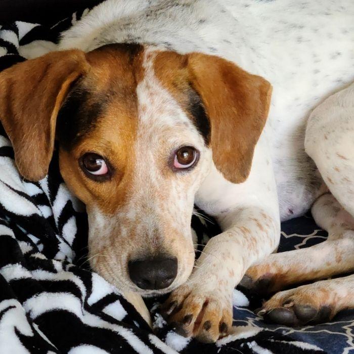 Sieanna, adopt, dog